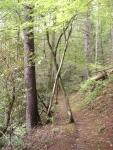 Abrams Falls Trail